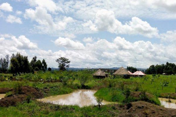Upendo-love-garden